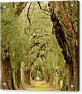 Line Of Oak Trees To Distance Acrylic Print