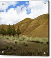 Line Of Trees At Painted Hills Acrylic Print