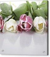 Line Of Tulips Acrylic Print