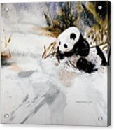 Ling Ling Acrylic Print