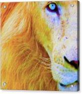 Lion Blue By Nicholas Nixo Efthimiou Acrylic Print