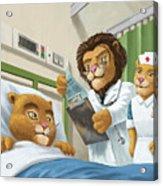 Lion Cub In Hospital Acrylic Print