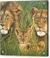 Lion Family Acrylic Print