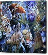 Lion Fish Acrylic Print