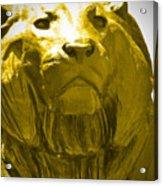 Lion Gold Acrylic Print