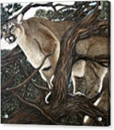 Lion In The Tree Acrylic Print