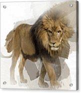 Lion Lion Lion Acrylic Print