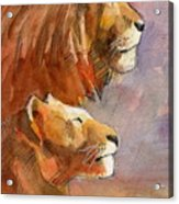 Lion, Lioness Acrylic Print