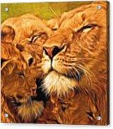 Lion Love #2 Acrylic Print