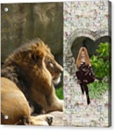 Lion Love Acrylic Print