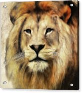 Lion Majesty Acrylic Print