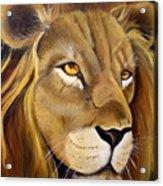 Lion Male Acrylic Print