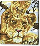 Lioness And Son Acrylic Print