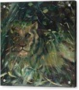Lioness' Den Acrylic Print