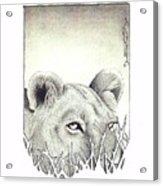 Lioness Rising Acrylic Print