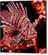 Lionfish Of The Sea Acrylic Print