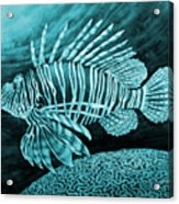 Lionfish On Blue Acrylic Print