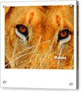 Stare Down Acrylic Print