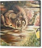 Blaa Kattproduksjoner           Watch  Out For  Yellow  Bird  Acrylic Print