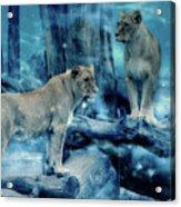 Lions Of The Mist Acrylic Print