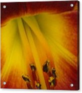 Lip Of The Lily Acrylic Print