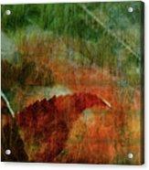 Liquid Amber Acrylic Print