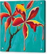 Liquidia Plumeria Acrylic Print