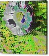 Liseron En Aout  Acrylic Print