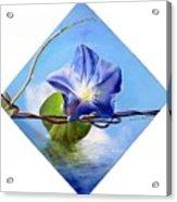 Liseron Acrylic Print