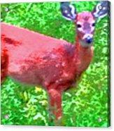 Listening Deer Acrylic Print