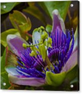 Listening To Deep Space Acrylic Print