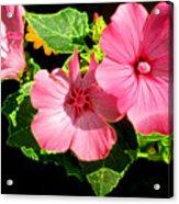 Lite Floral Acrylic Print
