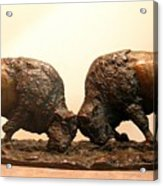 Litigation  Bronze Sculpture Of Two American Bison Bulls Fighting Acrylic Print