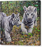 Little And Brave  Acrylic Print