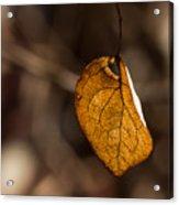 Little Autumn Leaf Acrylic Print