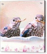 Little Bambinos Acrylic Print