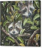 Little Bandits Acrylic Print