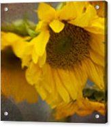 Little Bit Of Sunshine Acrylic Print