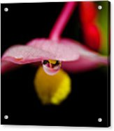 Little Blossom With Drop Acrylic Print