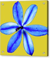 Little Blue Flower On A Yellow Background Acrylic Print