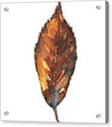 Little Brown Leaf Acrylic Print