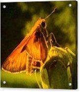 Little Brown Skipper Butterfly Acrylic Print