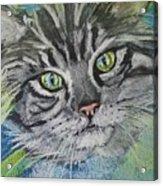 Little Cat Acrylic Print