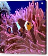 Little Clown Fish Acrylic Print