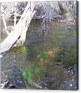 Little Colorado River South Fork Acrylic Print