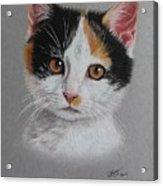 Little Cutie Acrylic Print