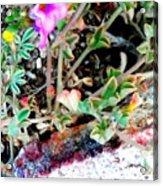 Little Desert Darlings Acrylic Print