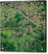Little Diamonds In My Trees Acrylic Print