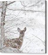 Little Doe In Snow Acrylic Print