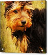 Little Dog II Acrylic Print by Angela Doelling AD DESIGN Photo and PhotoArt